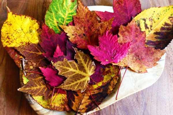 Flotte efterårsblade